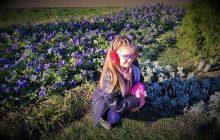 На рождество в Сочи цветут анютины глазки