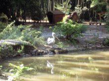 пеликан нижний парк