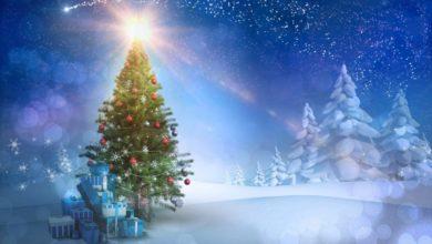 Новогодние елки в Сочи
