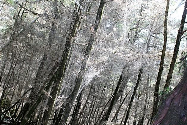 деревья пораженные вредителями