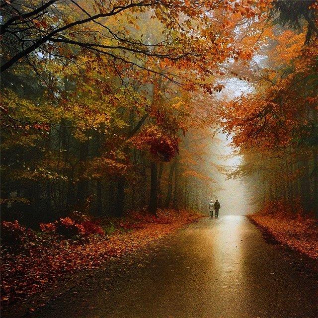 Стихотворение: Адлерская осень