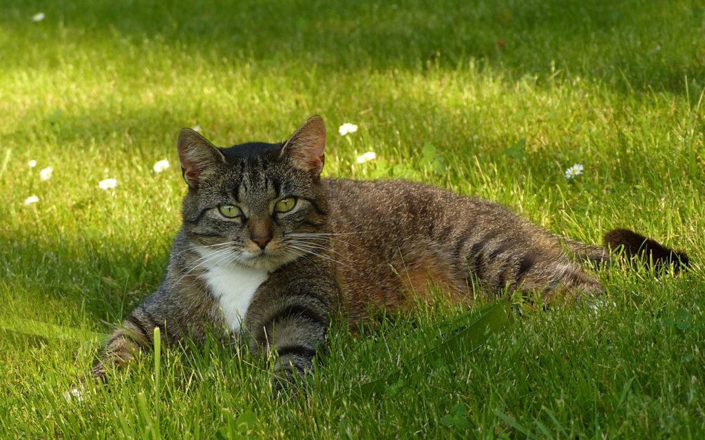Истории про кошек: почему именно 9 жизней?