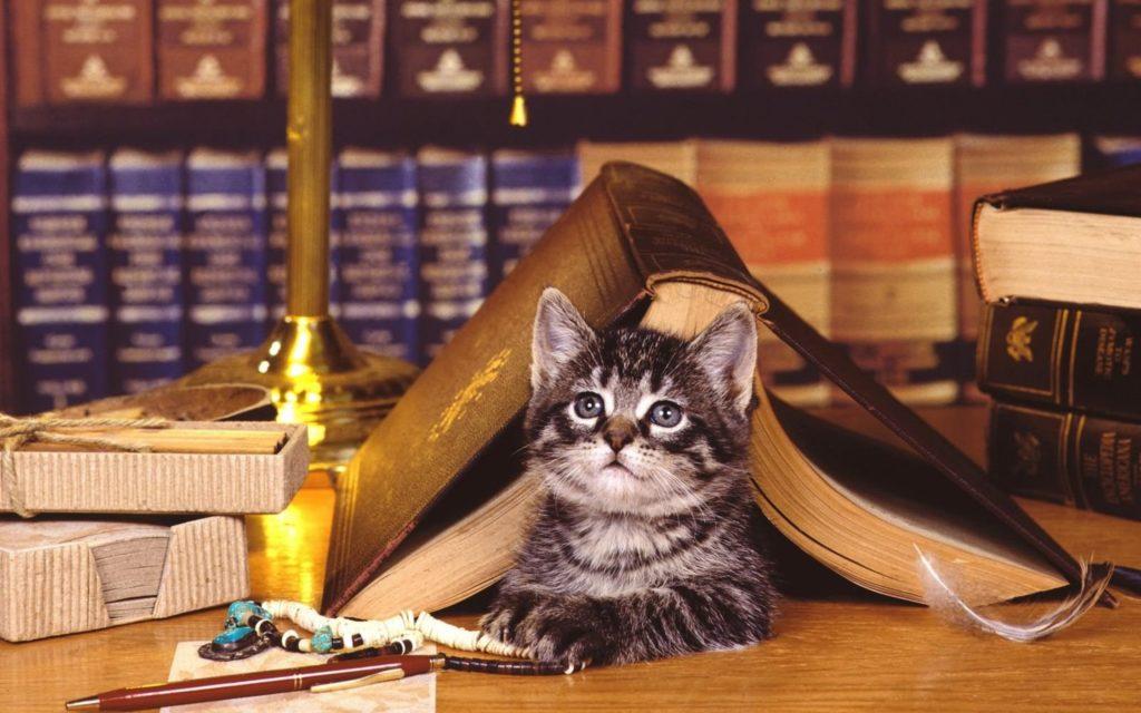Кошка в доме: верный друг или заклятый враг?