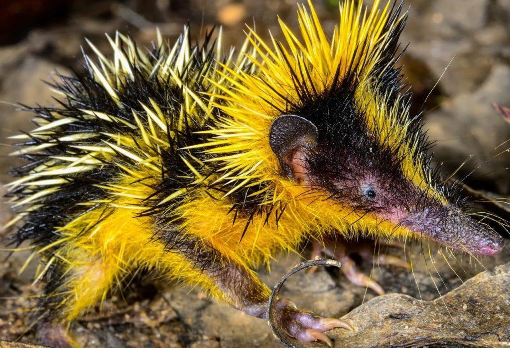 Необычные животные, о которых вы вряд ли знали