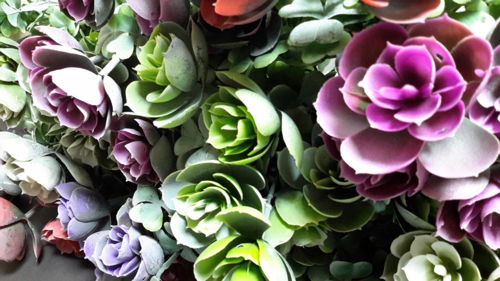 Красивые и необычные: 10 комнатных растений, которые стоит увидеть