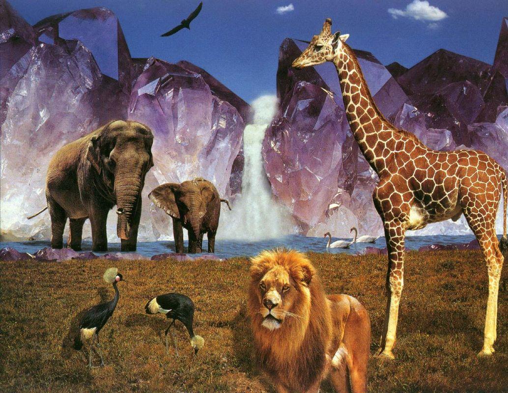 Животные одной картинкой