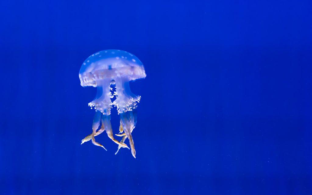Топ-10 интересных фактов из жизни медуз