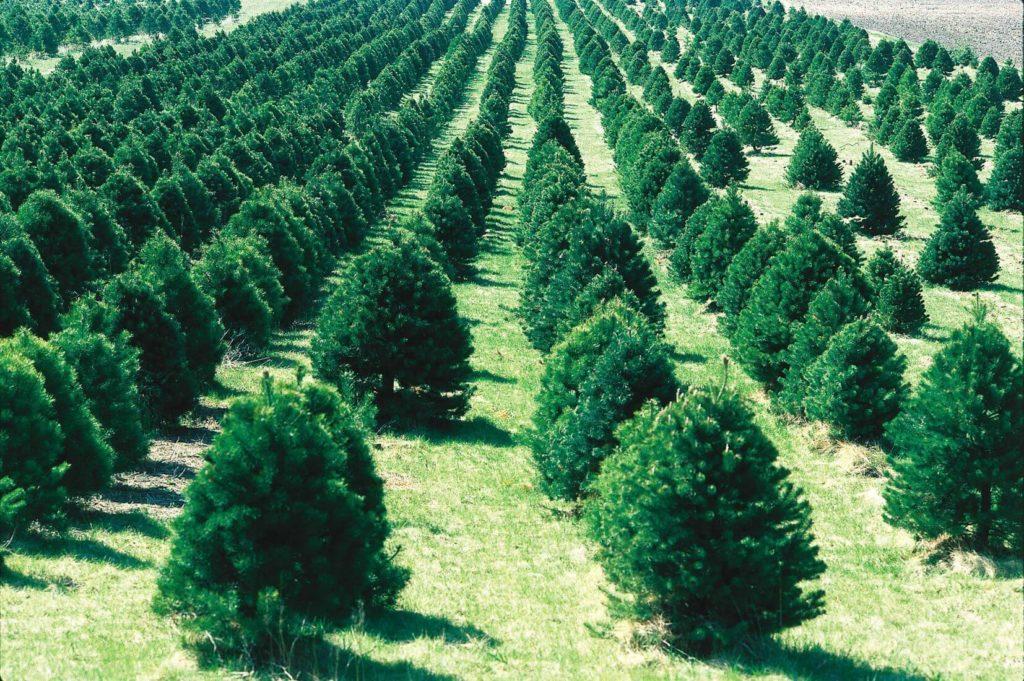 Деревья – наше спасение. Вклад каждого в защиту Планеты