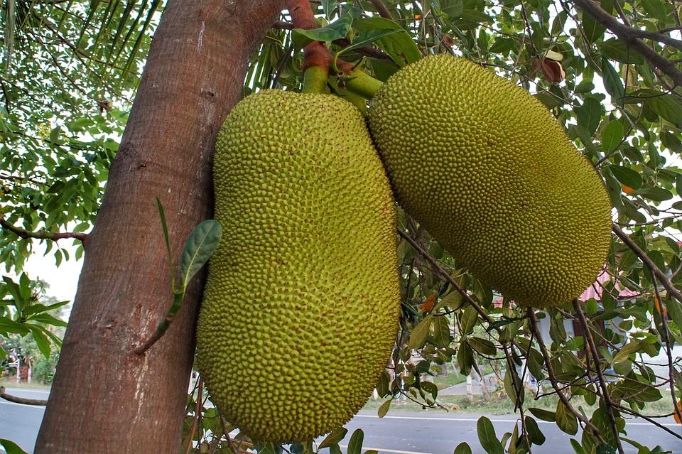 Пробуем экзотику на вкус: топ-5 лучших фруктов Вьетнама с фото и описанием, как их есть