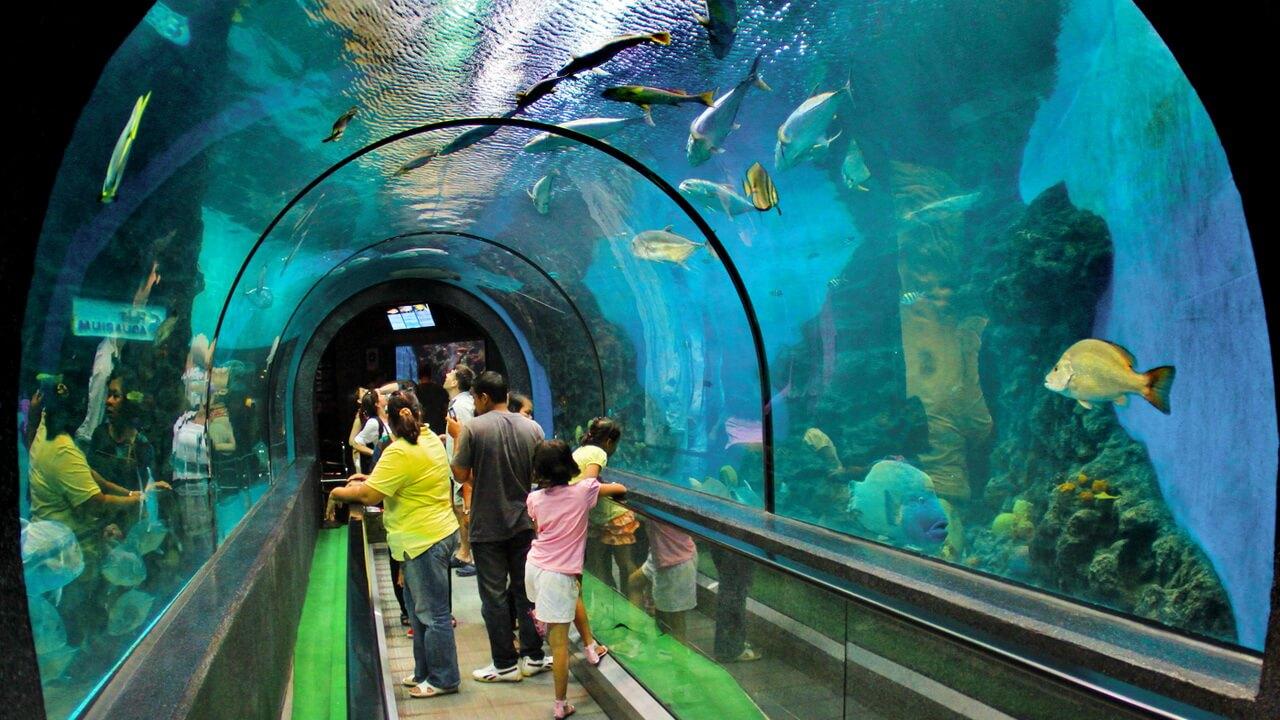 Топ-5 лучших развлечений на Пхукете для любой категории туристов
