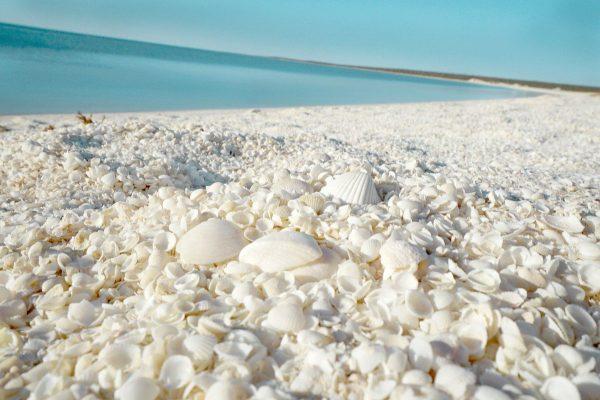 4 красивых пляжа, где вас могут съесть