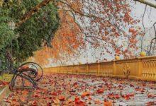 Температура воды и воздуха в Сочи в октябре 2020