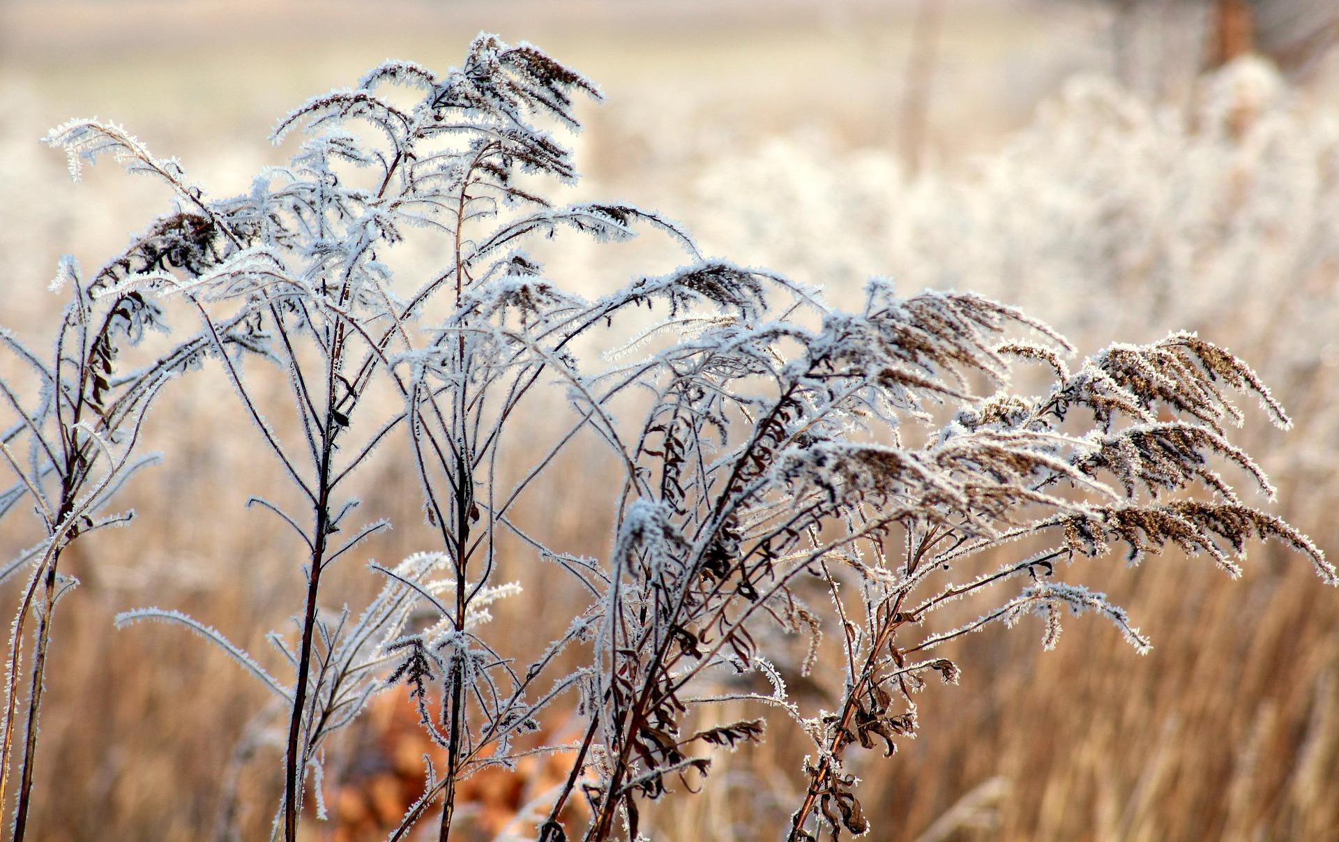Зимние каникулы в Сочи: какой будет погода в 2022 году
