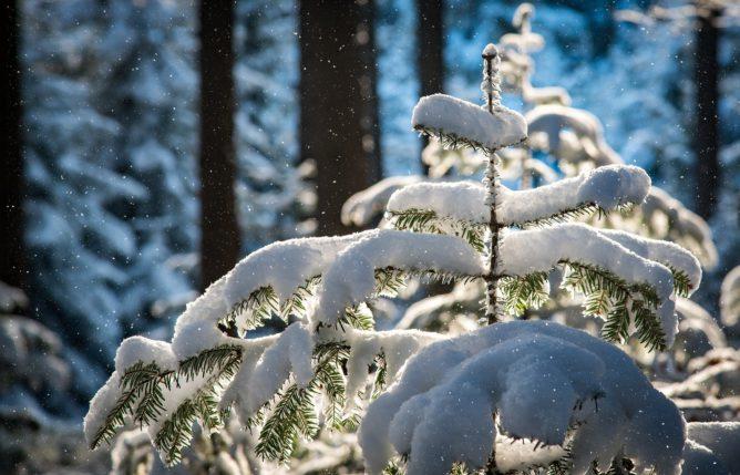 Погода в Сочи на Новый Год 2022