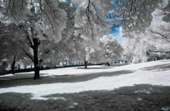 Какой будет погода в Сочи в январе 2022 года