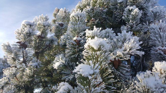 Погода в Сочи в январе