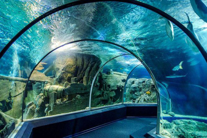 аквариум «Sochi Discovery World» сочи в январе