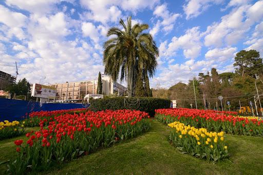 Что посетить в марте Сочи