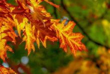 Погода в Сочи в октябре